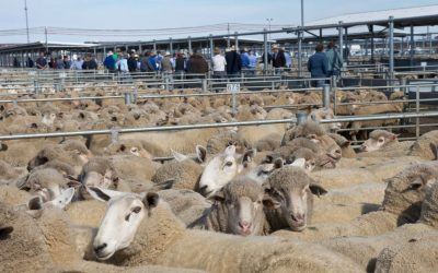 Labor Set To Sell-Out Farmers