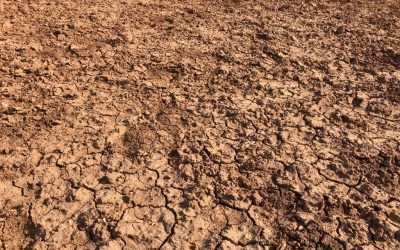 Nationals In Government Slash Drought Paperwork