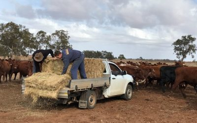 Calls To 'Feed A Farmer' This Festive Season